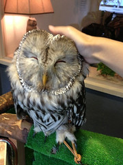 """Owl Cafe 15 • <a style=""""font-size:0.8em;"""" href=""""http://www.flickr.com/photos/66379360@N02/10588795614/"""" target=""""_blank"""">View on Flickr</a>"""