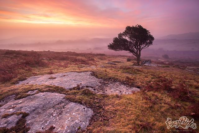Haytor Down Mist