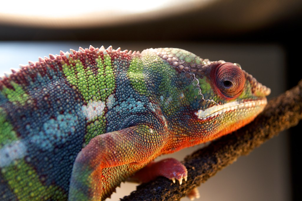 Can I help you? by Florence Ivy, on Flickr