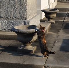 StLouis 3- Kitty 2
