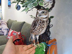 """Owl Cafe 10 • <a style=""""font-size:0.8em;"""" href=""""http://www.flickr.com/photos/66379360@N02/10588796934/"""" target=""""_blank"""">View on Flickr</a>"""