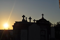 St Patricks crosses at dawn