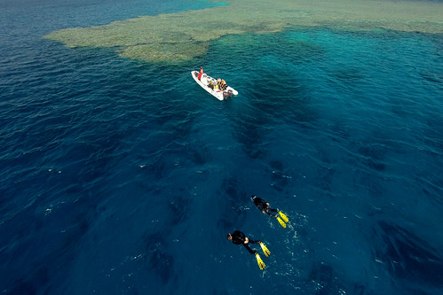 Snorkling from RIB, Fury Shoals, Egypt