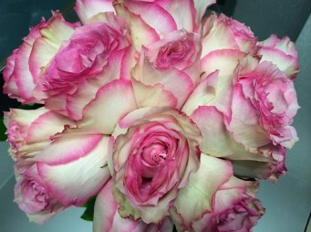 Garden Roses - Shirley's Flowers & Gifts, Inc., in Rogers, Ark.