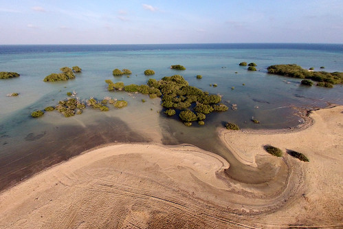 Mangroves, Wadi Lahami, Egypt
