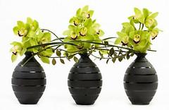 Cymbidium Orchids — Heather de Kok, AAF, AIFD, PFCI, of Grower Direct Fresh Cut Flowers in Edmonton, Alberta. http://www.canadafloraldelivery.com/