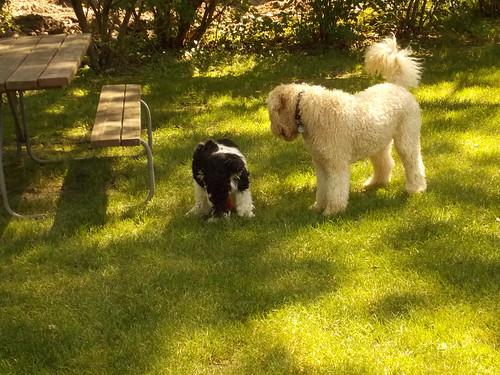 Latte and Sadie- Picnic Bench