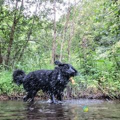 "nasser Hund (Oberschledorn) • <a style=""font-size:0.8em;"" href=""http://www.flickr.com/photos/84812658@N00/14588378772/"" target=""_blank"">View on Flickr</a>"