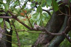 bird at Shirakawa park at Nagoya, Japan
