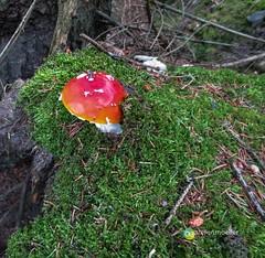 "Sauerland: Wald von Oberschledorn • <a style=""font-size:0.8em;"" href=""http://www.flickr.com/photos/84812658@N00/14402656517/"" target=""_blank"">View on Flickr</a>"