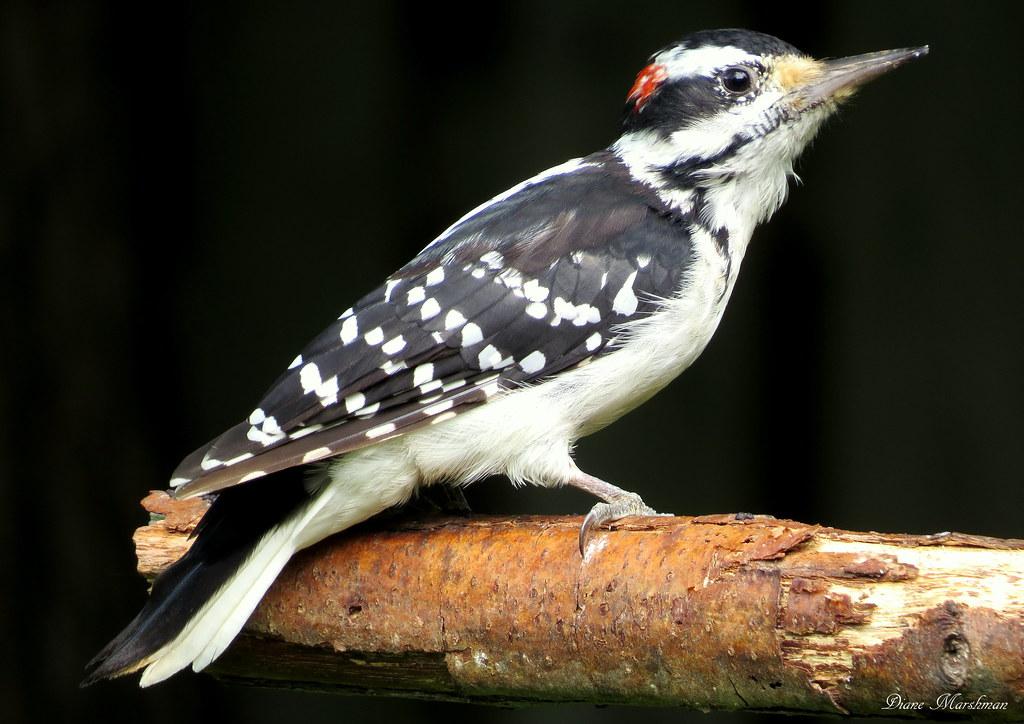 White Bird Belly Gray Pennsylvania