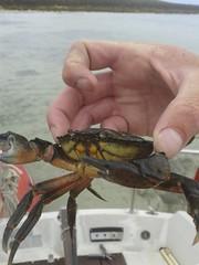 Le Crabe Glenan 2