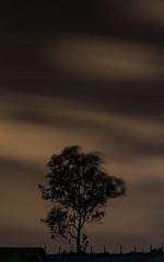 Vento na copa da árvore