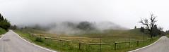 nebbia a banchi.