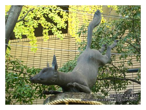 [06.11.24] 銀杏樹下有一隻姿勢優美的狐狸