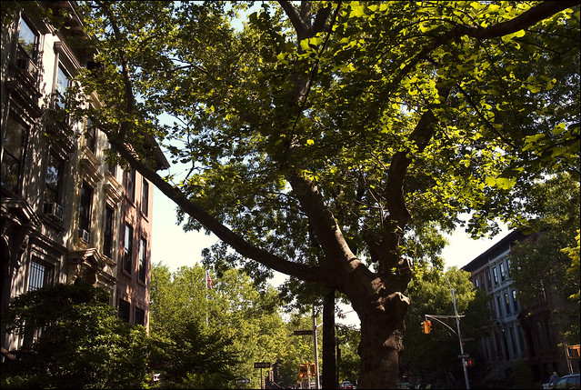 Park Slope Brownstones (Photo by Bruno J. Navarro)