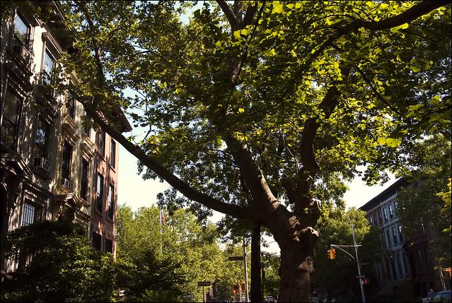 Park Slope Brownstones (Photo by Bruno J. Navarro)