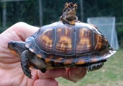 Spider on Frog on Turtle