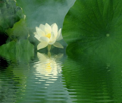 Lotus Flower Reflections / green / IMGP6812-refl - زهرة اللوتس, ハスの花, 莲花, گل لوتوس, Fleur de Lotus, Lotosblume, कुंद, 연꽃