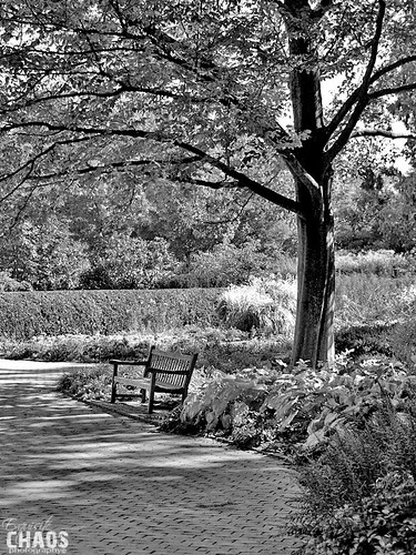 Black & White Park Bench