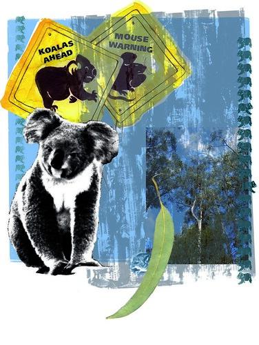 koala's dance by mail