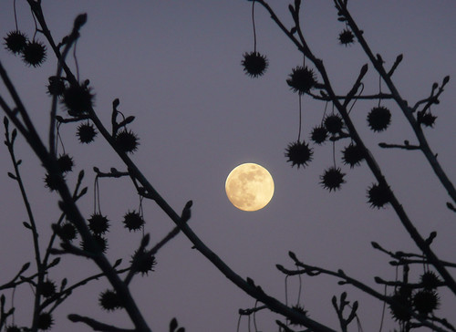 Moon and stars - foto: joiseyshowaa, flickr