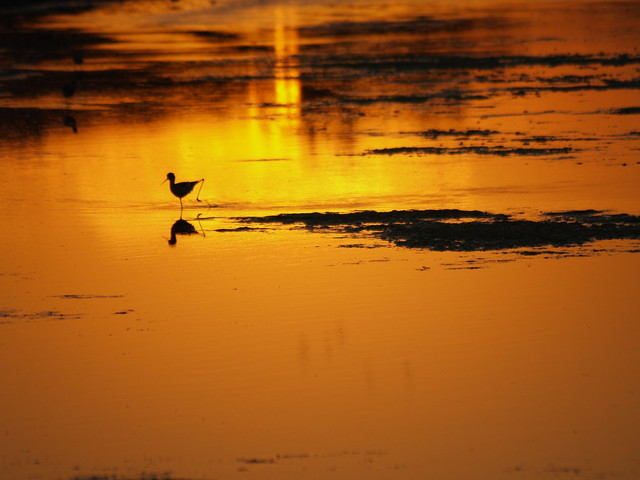 Bird At Sunset - Agra