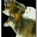 Lobos de Minnesota