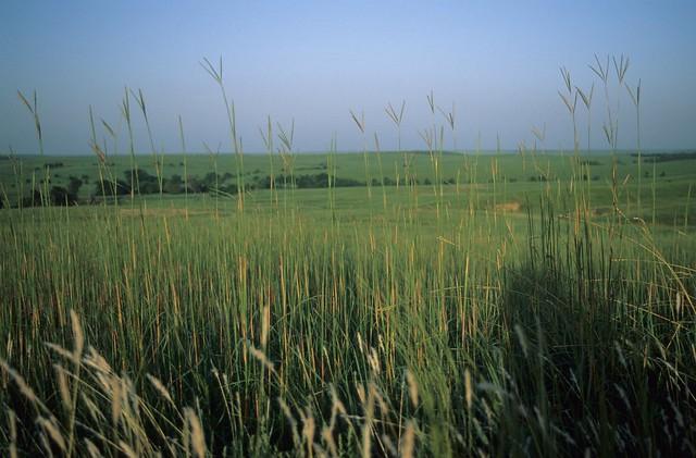 I00664 Big Bluestem Tallgrass Prairie