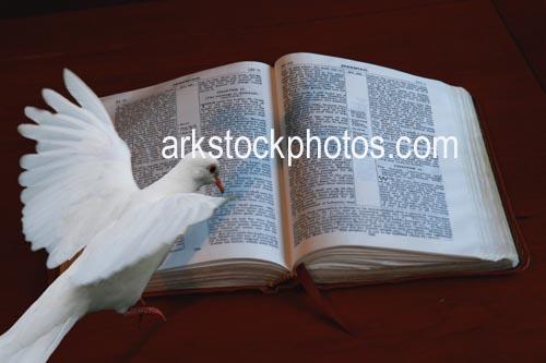 Dove Bible White