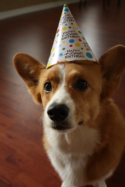 Corgis In Birthday Hats A Gallery On Flickr