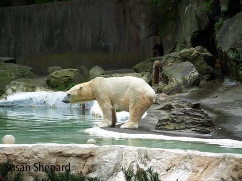 Bronx Zoo Light Show