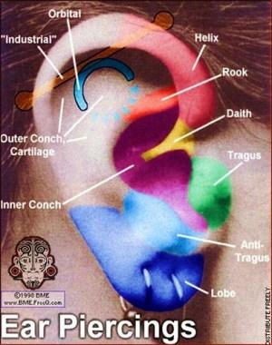 ear piercing diagram   Flickr  Photo Sharing!
