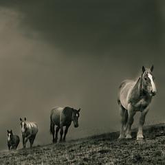 Cavalls al Balandrau