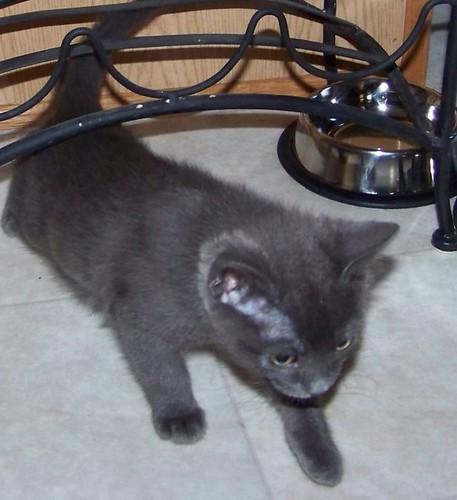 kitty 011 (994 x 687)