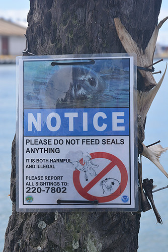 don't feed the seals