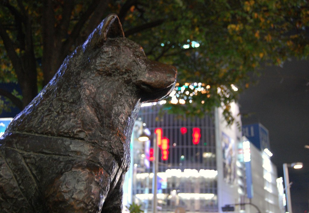 Portrait of Hachiko