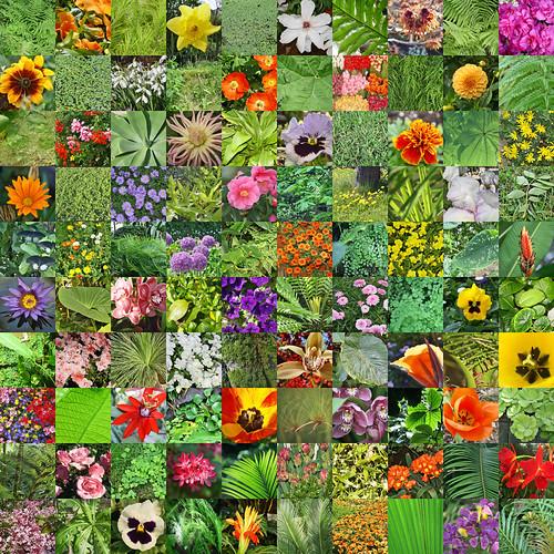 Collage 100 x Blumen, Blüten und Blätter por RiesenFotos