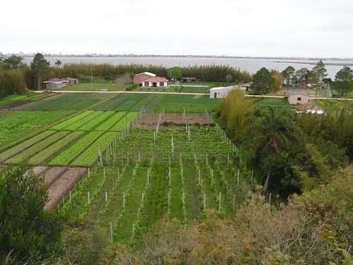 A pequena propriedade rural
