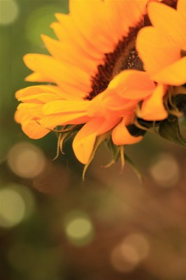 End of Summer 'bokeh'
