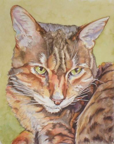 Cat Portrait - Commission