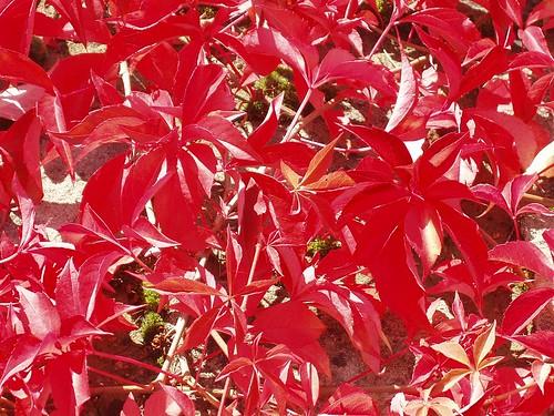 200810040052_autumn-colours