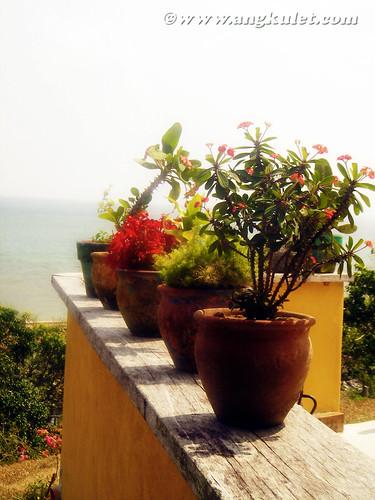 Euphorbias on a sill, Casa Rosa, Taytay, Palawan