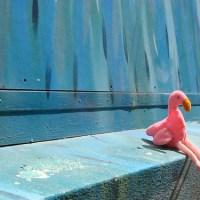 Judo Champions, Mars, and Flamingos