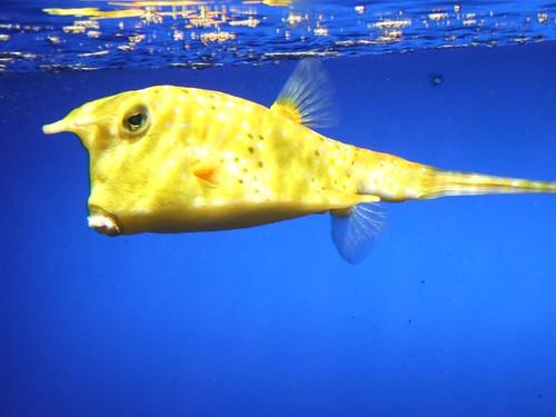 Fisch (Loro Parque) por melm@r