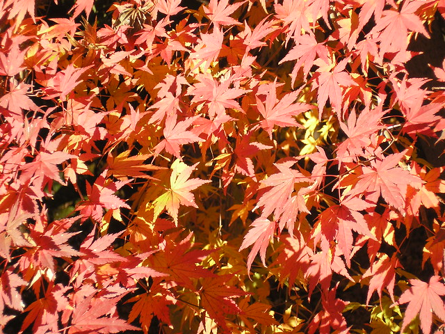 Autumn colours, Ueno Park