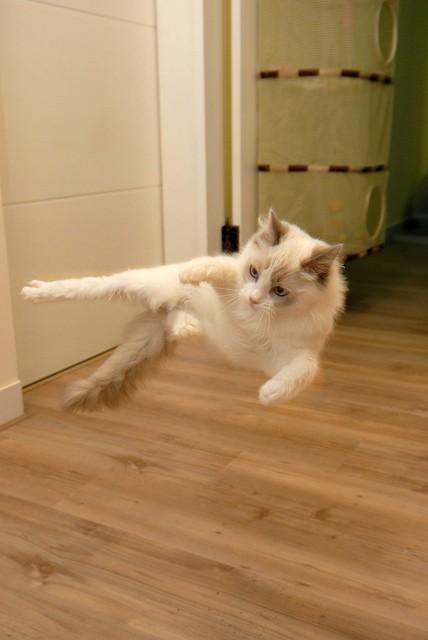 Glaedyr (Ninja Cat)