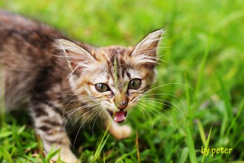 cat mad?