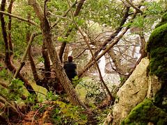 Ρουμάνια, νερά, φυτά και μανιτάρια: Χειμωνιάτικη Κατάβαση του ποταμού Μύρσωνα.