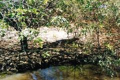 Kakadu National Park - Yellow Water